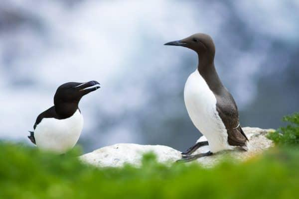 Exposition du Concours du Festival International de l'Oiseau et de la Nature